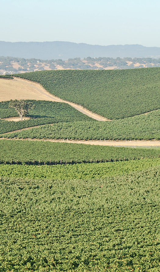 Vineyards overview