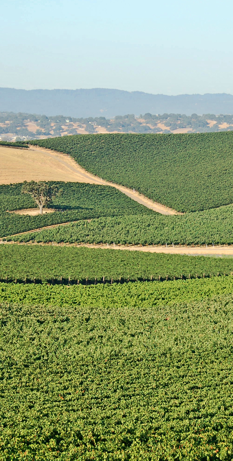 Huerhuero Vineyard overview image